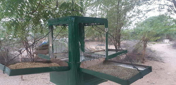 Feeders are built and placed throughout the village to help feed birds and small animals.