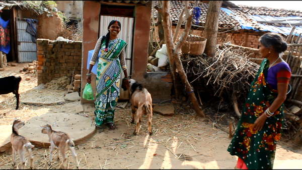 Jogni Devi works as the designated Pashu Sakhi to keep goats and other livestock healthy and profitable.